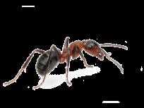 guaranteed ant control