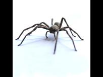 Spider Pest